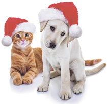 dog and cat christmas